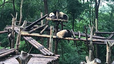 Chengdu Research Base of Giant Panda